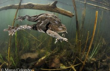 DuikeninBeeld op Nature Talks - een dag vol natuur onder water!