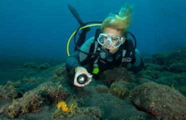 DiveXperience Online – hét online duikevent komt eraan!