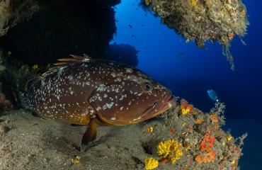 Vijf tips voor duiken bij de Canarische Eilanden