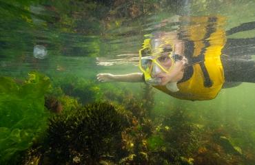 Ga mee op snorkelsafari én krijg korting op een (intro)duik!