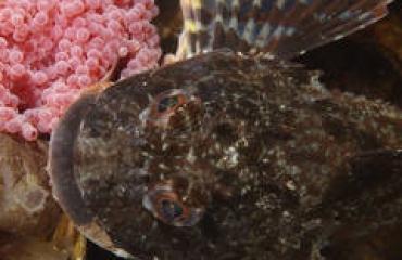 René Weterings - Dreischor Reefballs....zeedonderpad-hotspot van de maand!