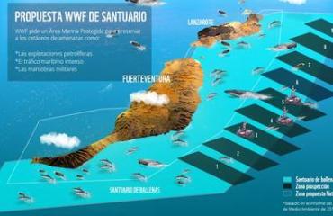 WNF wil reservaat voor walvissen en dolfijnen bij Canarische Eilanden