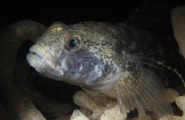 René Weterings - Een verrassende school vissen!