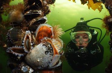 Cursus Onderwaterfotografie Gevorderd - echt iets voor jou!