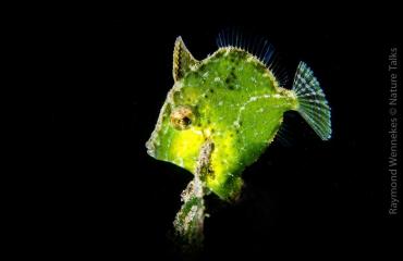 DiveXperience Special: Onderwaterfotografie