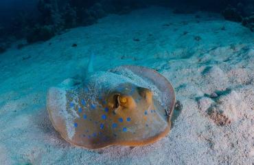 Summerlabb organiseert klimaatexpeditie naar Rode Zee