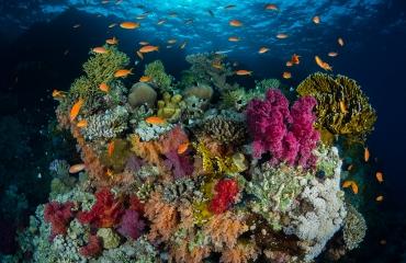 Kleurrijk koraal - Het verhaal achter de foto