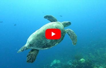 Rianne Poessé - Non-stop adelaarsroggen en zeeschildpadden