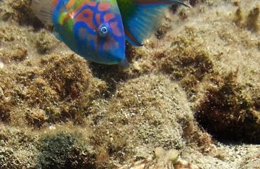 Richard Hoogeboom - Lanzarote: aantrekkelijke duikbestemming?
