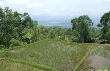 Rijst op reis