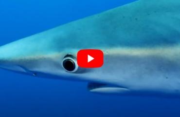 Robin de Bleyser - Shark & Ray Safari