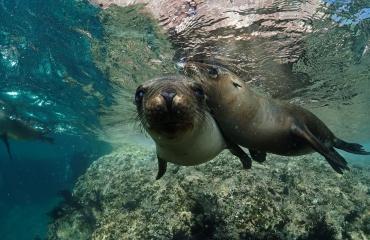 WK 2017 - Spelen met zeeleeuwen