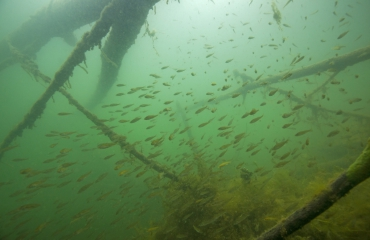 Onder water in Rotterdam - Biodiversiteit vergroten