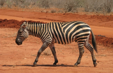 Saskia Uit den Bogaard - Safari boven én onder water in Kenia (4)