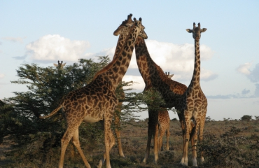 Saskia Uit den Bogaard - Safari boven én onder water in Kenia (2)