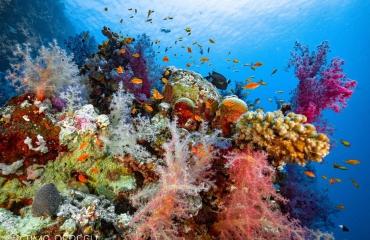 Maagdelijk duiken in Saoedi-Arabië