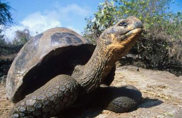 Zoetwaterschildpad op 4 kilometer hoogte