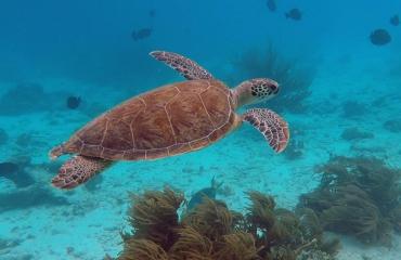 Jurjen Balkema - Missie: Schildpadden op Bonaire