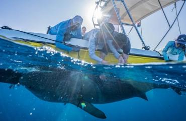 Baanbrekend onderzoek tijdens Shark Shakedown