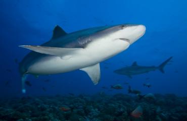 Wat kan ik doen om haaien te beschermen?