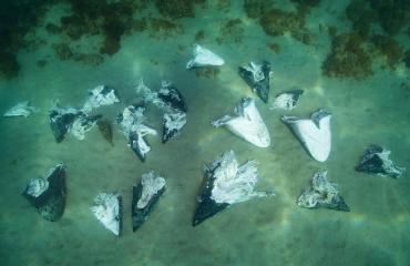 Haaienkoppen