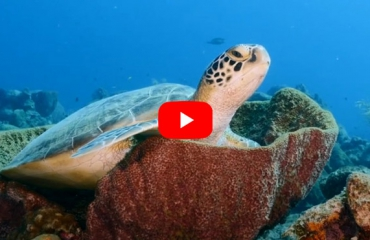 Film: Take time to breathe - Curaçao