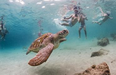 Snorkelen met zeeschildpadden - Het verhaal achter de foto