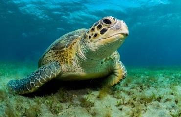 Duikvaker 2019 - Onderwaterfotografie voor beginners