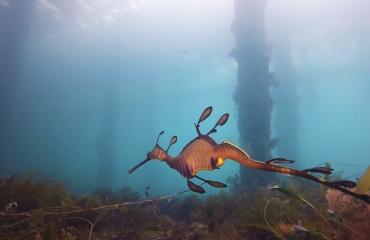 Sverrin Schoonderwoerd - Australia in Motion