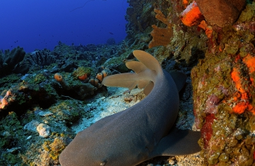 Krachtenbundeling om bijvangst van haaien te beperken