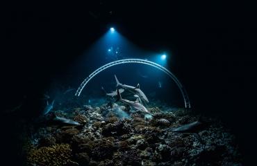 Wildlife Film Festival Rotterdam ademt natuur, ook onder water