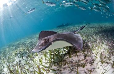 Barrièrerif Belize niet meer in gevarenzone volgens UNESCO