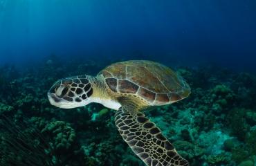 Tips voor duiken en snorkelen op Bonaire