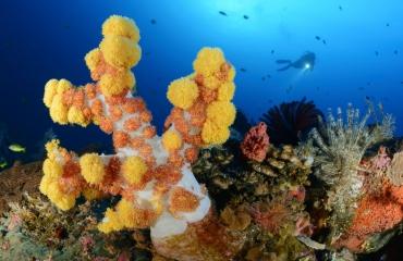 Bali - Alle schoonheid en variatie in één duikrondreis!