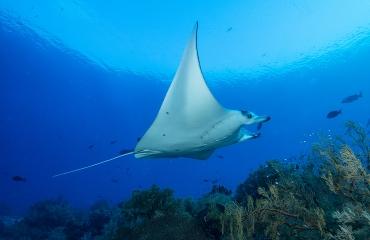 Mijn mooiste (manta)duik