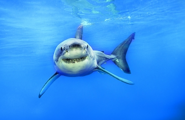 Win kaarten voor Great White Shark!