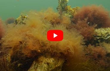 Verhaaltjes uit de Noordzee - Zeewieren