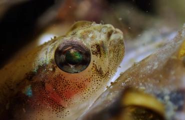 Glenn De Wilde - A small fish, big eyes