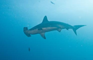 John Haverkate - Naar de haaien…