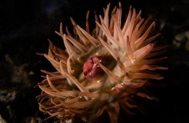 Ad Aleman - Onderwaterfoto's met alleen natte handen
