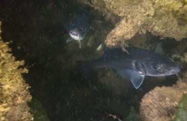 Ad Aleman - Grote vissen