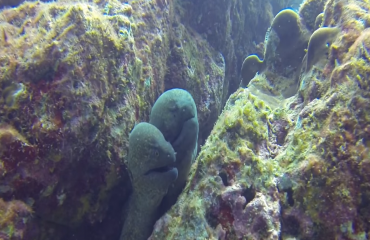 Bas Kulderij - Naar de haaien in Costa Rica
