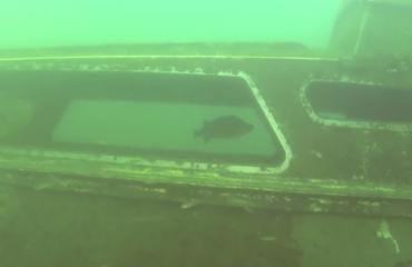 Ron Krotwaar - Super duikje in Boschmolenplas