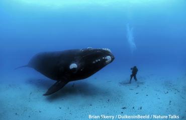 Brian Skerry: «Zo maakte ik deze foto»