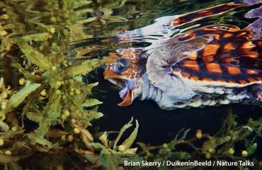 Nature Talks en DuikeninBeeld - een dag vol natuur onder water!