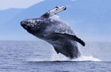 Verliefde walvis