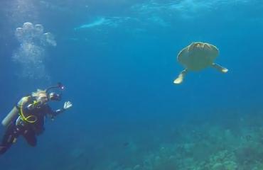 Diana van den Heuvel - Mooie duik aan de oostkant van Bonaire