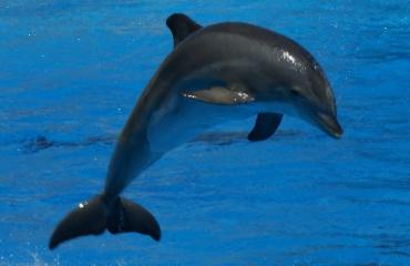 Frankrijk verbiedt het houden van dolfijnen in gevangenschap