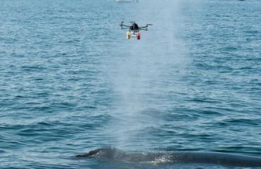 Drone vangt adem walvissen op