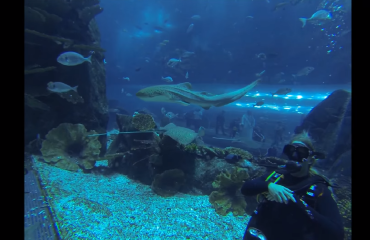 Eva Heijnen - Shark Dive in the Dubai Mall Aquarium